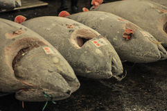 Tokyo Tsukiji Fish Market Stock Photos