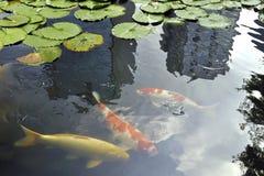 Tokyo zen Royalty Free Stock Image