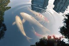 Tokyo zen pond Stock Photos