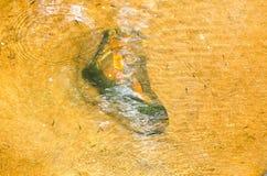 Tol similar/zapato/piedra/río de Hope/be Fotografía de archivo libre de regalías