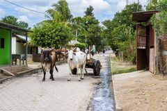 Simple life in Nicaragua, 2018. Tola, Nicaragua - January 20: Rural streets in Nicaragua with a pair of Ox strapped to a cart in the middle of the road. January Royalty Free Stock Photo