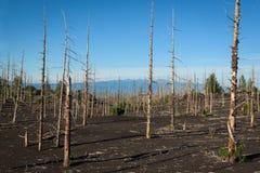 Tolbachik död skog, en tyst vittne av en katastrof royaltyfri bild
