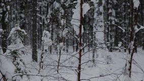 Tolbukhin latarnia morska w zatoce Finlandia i fort Refujemy muldy zamra?aj? panoramicznego dennego widok zbiory