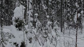 Tolbukhin latarnia morska w zatoce Finlandia i fort Refujemy muldy zamra?aj? panoramicznego dennego widok zdjęcie wideo