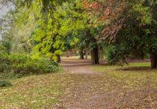 Toldo de árbol del otoño sobre una trayectoria frondosa Fotos de archivo libres de regalías