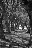 Toldo de árbol en el top de la colina Foto de archivo