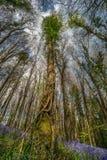 Toldo de árbol de la campanilla imagenes de archivo