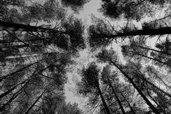 Toldo de árbol de los abrigos esquimales de Vingio en Vilna Foto de archivo libre de regalías