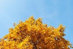 Toldo de Yeloow contra el cielo azul Imagen de archivo