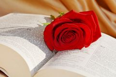 Tolerance and forgiveness, symbols. Red rose on the Bible suggesting the tolerance and the forgiveness  that can be achieved by religion and faith Stock Photo