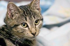 Tolerancia felina Imagen de archivo libre de regalías
