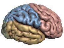 tolkning 3d av den mänskliga hjärnan Royaltyfri Bild