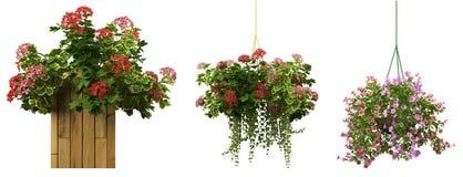 tolkning 3d av en realistisk blomkrukasamling som isoleras på wh Royaltyfri Foto
