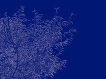 tolkning 3d av en skisserad trädritning på blått tillbaka Royaltyfria Foton