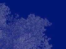 tolkning 3d av en skisserad trädritning som tillbaka isoleras på blått Royaltyfria Foton