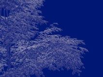 tolkning 3d av en skisserad trädritning som tillbaka isoleras på blått Royaltyfri Bild