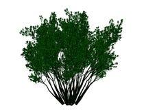 tolkning 3d av ett skisserat svart träd med isolerade gräsplankanter Royaltyfria Bilder