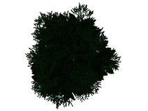 tolkning 3d av ett skisserat svart träd med isolerade gräsplankanter Arkivbilder