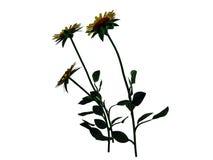 tolkningen 3d av blommabusken som isoleras på vit, kan användas för fo Arkivfoton