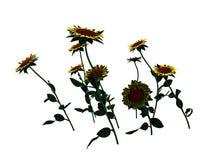 tolkningen 3d av blommabusken som isoleras på vit, kan användas för fo Arkivbild