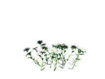 tolkningen 3d av blommabusken som isoleras på vit, kan användas för fo Arkivbilder