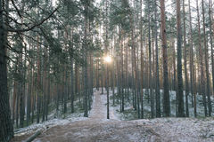 Tolkuse bog, Estonia. Winter morning in Tolkuse bog, Estonia royalty free stock photo
