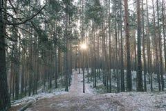 Tolkuse bog, Estonia Royalty Free Stock Photo