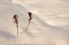 Tolleranza delle piante. Fotografia Stock Libera da Diritti