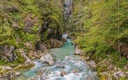 Tolmin klyfta, natur, Slovenien Arkivbilder
