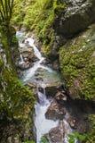 Tolmin klyfta, natur, Slovenien Royaltyfri Bild