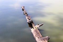 Toltec-Hügel - Schildkröte auf einem Klotz Lizenzfreie Stockbilder