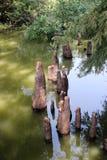 Toltec-Hügel - Zypresse-Knie stockfotografie