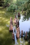 Toltec kullar - cypressknä Arkivbild