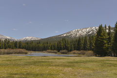 Tolumne Meadows, Yosemite National Park, Californi Royalty Free Stock Image