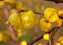 Tolv blommor i blom Royaltyfri Bild