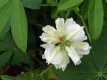 Tomé esta imagen en jardín botánico del bah de Lal en Bangalore foto de archivo