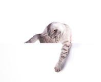 Tom affisch för katt Arkivfoton