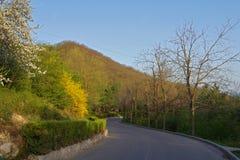 Tom asfaltväg med blå himmel på våren Arkivfoto