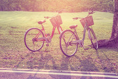 Tom bonito da bicicleta do vintage no parque imagem de stock royalty free