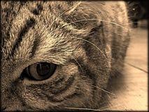 Tom the cat. royalty free stock photos