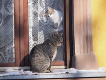 Tom and cat. Male cat who is outside and female cat that is inside. She is trying to animate Royalty Free Stock Photo