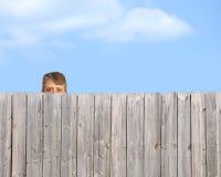 Tom de mirada furtiva que acecha sobre acosador de madera de la cerca Fotos de archivo libres de regalías