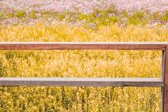Tom do vintage do terraço de madeira no fundo do campo de flor Foto de Stock