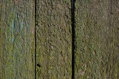 Tom gammal wood yttersida som täckas med mossa Texturerad bakgrund för produkt- och matsammansättning med utrymme för text Fotografering för Bildbyråer