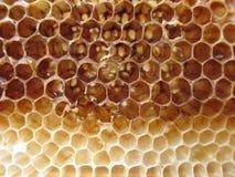 Tom honungskakatexturnärbild Fotografering för Bildbyråer