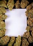 Tom kanfas som inramas av torkad st för knoppar för cannabis indica och sativa, Arkivfoto