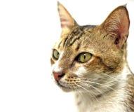 Tom-Katze stockfotos