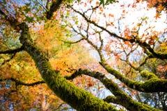 Tom Kubota Garden Arkivfoto