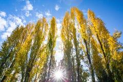 Tom Kubota Garden Stock Images