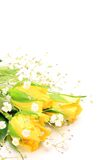 Rosa del amarillo e hierba de la neblina Foto de archivo libre de regalías